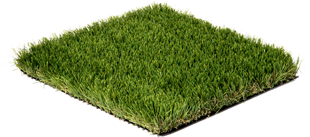 introduction-grass-image.png