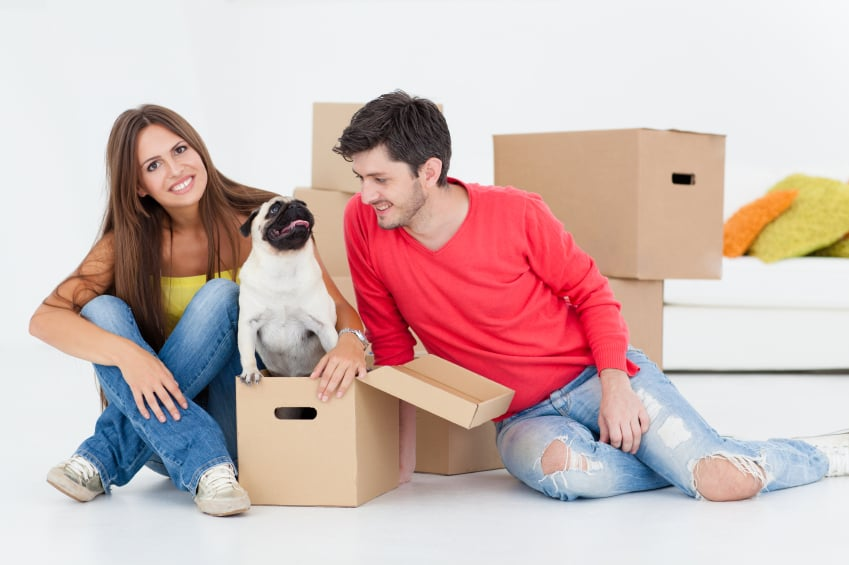 kings-transfer-moving-pets-calgary.jpg