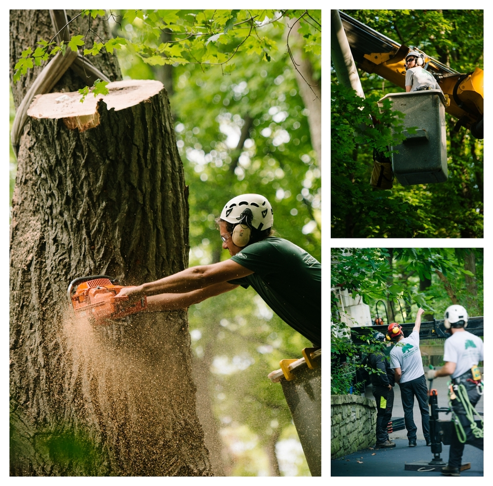Tree Care-137_WEB.jpg