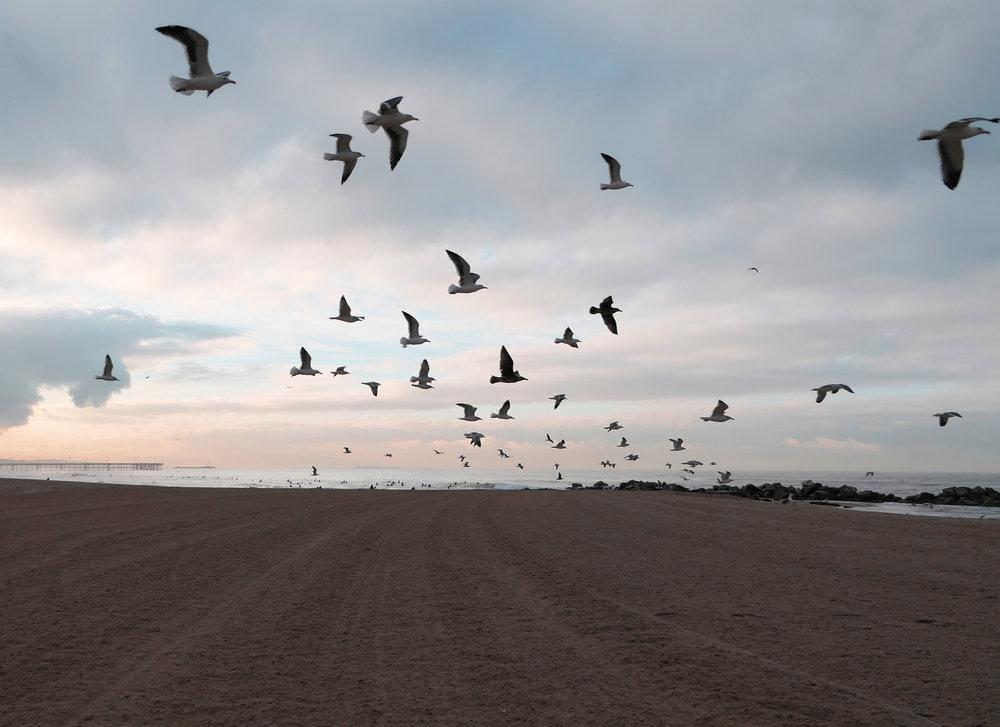 birdsofvenice.jpg