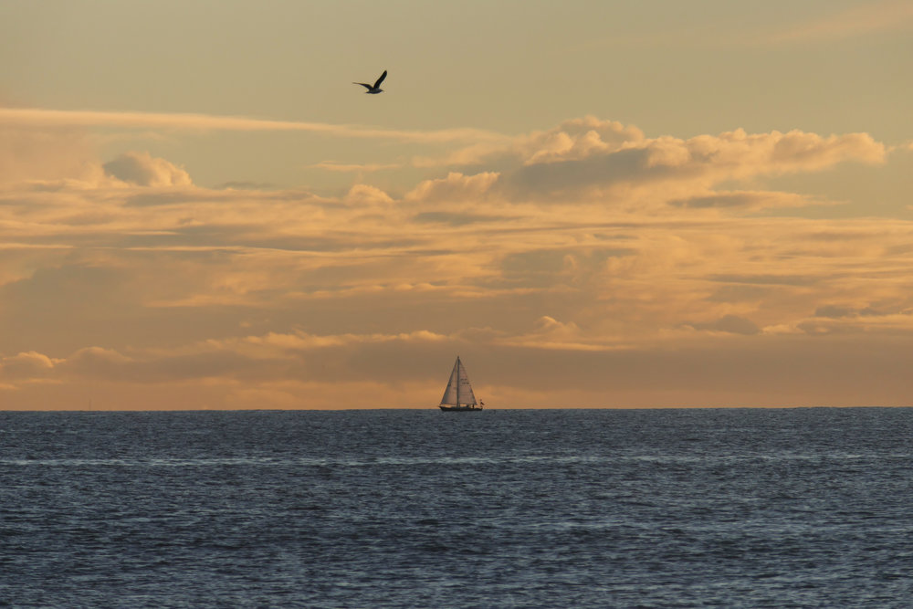 sailboatandbird.jpg