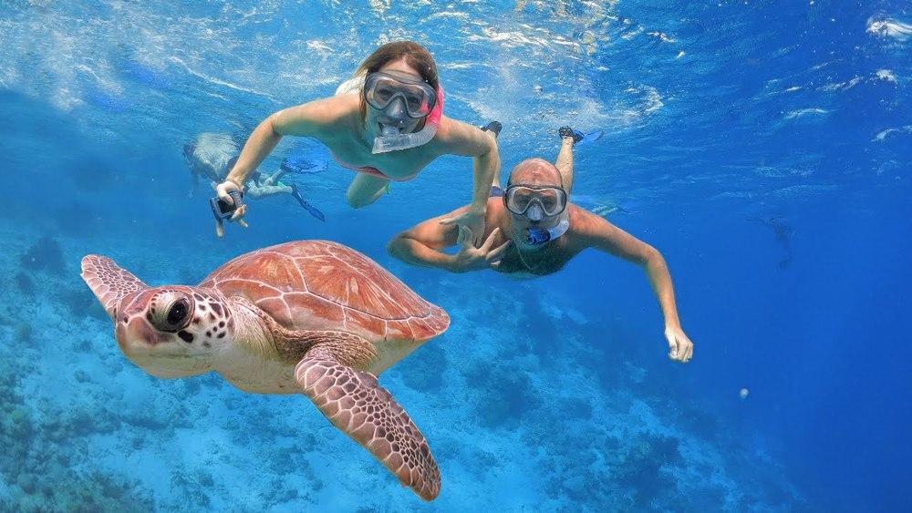 snorkeling_turtle.jpg