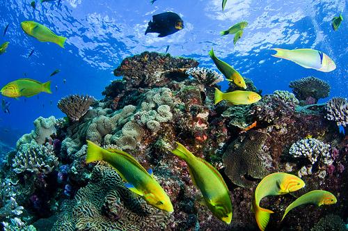 Reef001.jpg