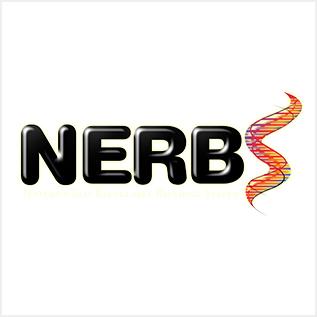 nerb.jpg