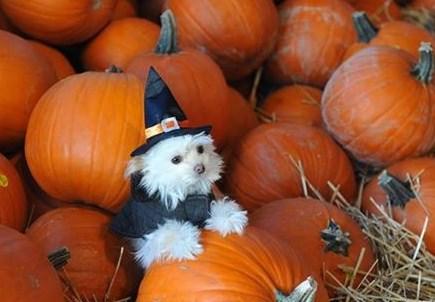 Typo Pumpkins 2.jpg