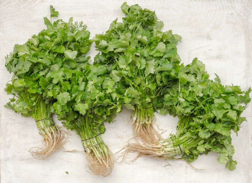 A spice and an herb all in one! Harvest the leaves (cilantro) or the seeds (coriander) for a truly unique taste that chefs and casual cooks can all appreciate.