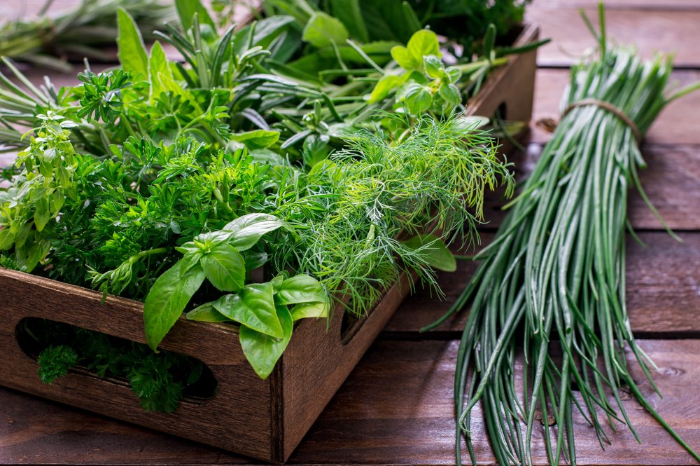Beautiful in the Garden and Delicious in the Kitchen, Culinary Herbs are Essential to Gardeners and Cooks Alike.