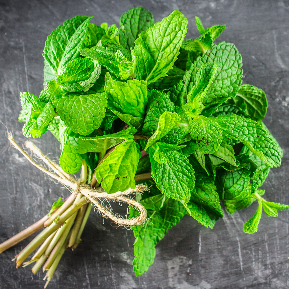 Peppermint is perhaps the most popular of all the mint varieties. Today it is a staple in the kitchen but historically it has been used in many home remedies. No matter how you use it, peppermint is an herb you will want around.