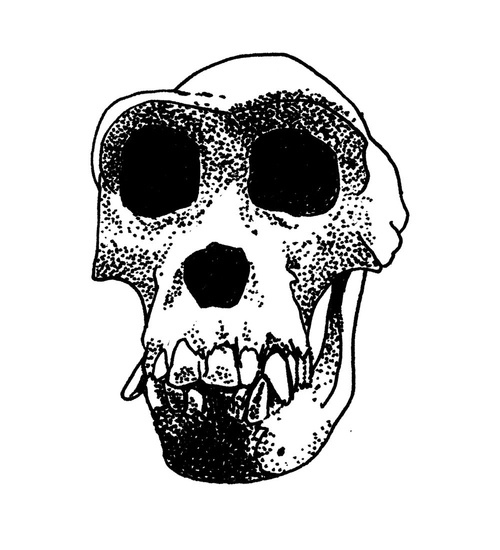 skulls_0000_Layer-Comp-1 copy.png