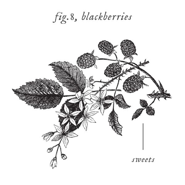 symbols_berries.jpg