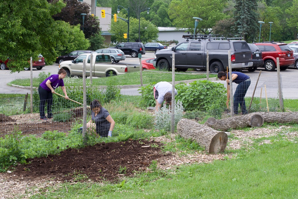 Working in the Indigenous garden on campus last summer (2015)
