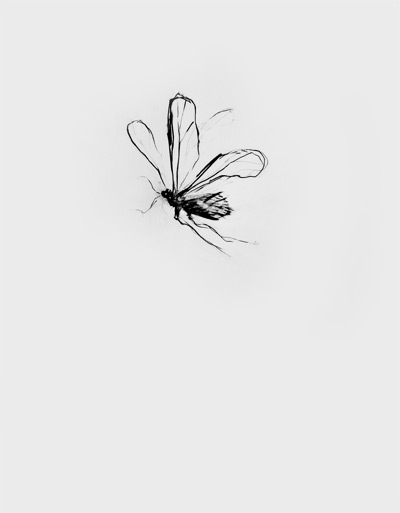 Insect 01