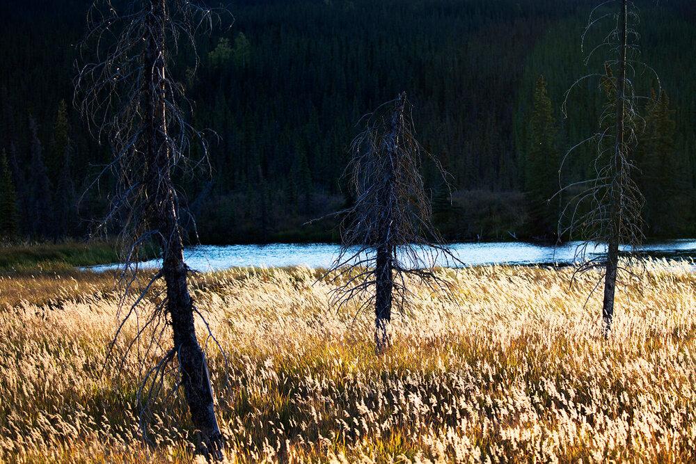 Denali, Alaska © Gail Fisher