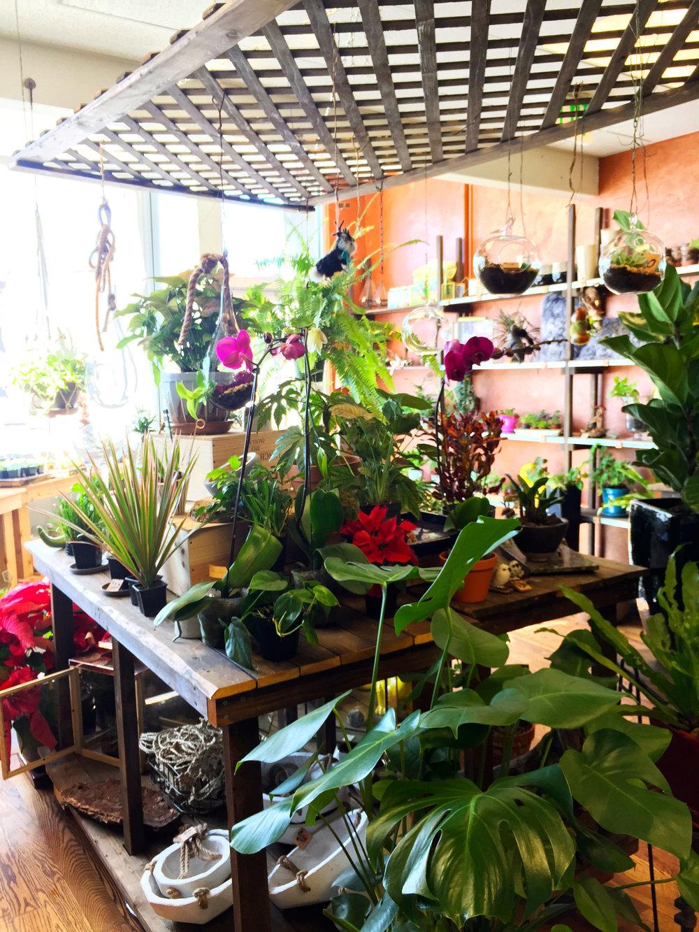 jdesigns-flowershop-3
