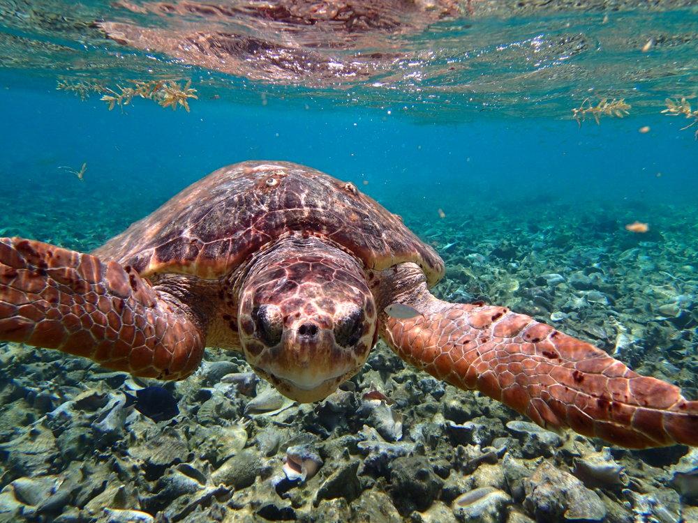 Snorkel Caye Caulker