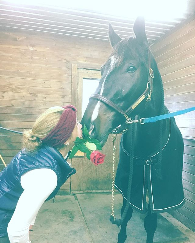 Flowers for the baby horses 🌹| #hedidntkillme #irishsporthorse #kisses #equestrian #4yo #whoneedsFlorida