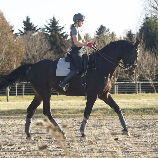 Halfpassing our troubles away 🦄 | #dressage #mares #equestrian #halfpass #prettygirl #halfpass #biggirl #hanovarian