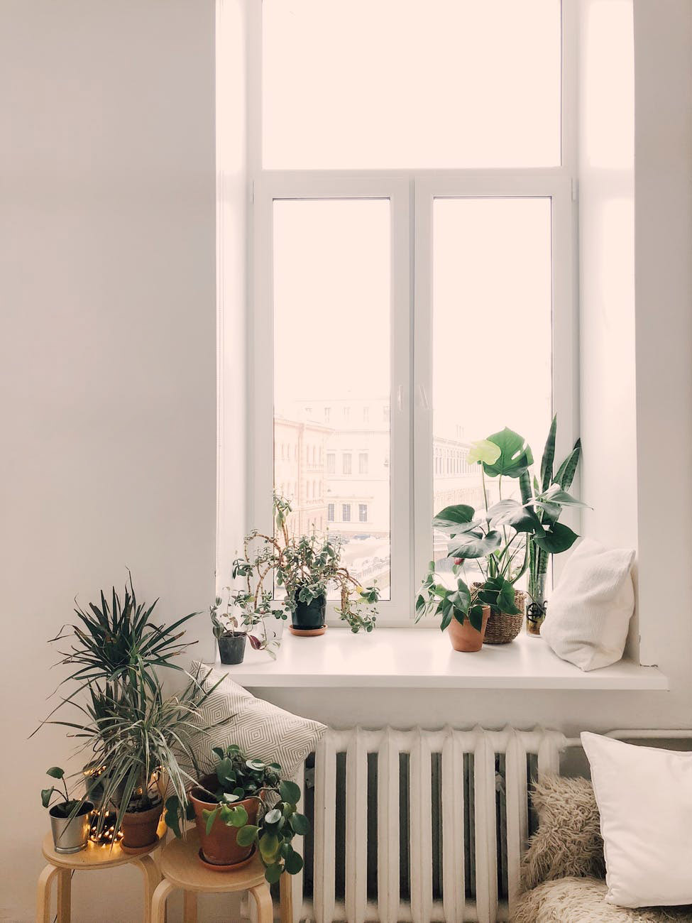 INDOOR PLANTS -