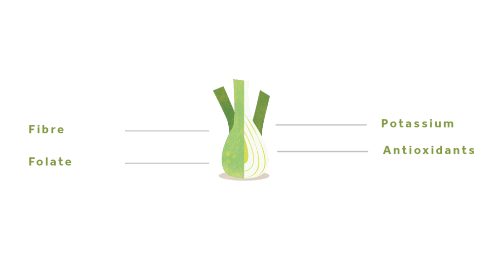 Fennel-01.png