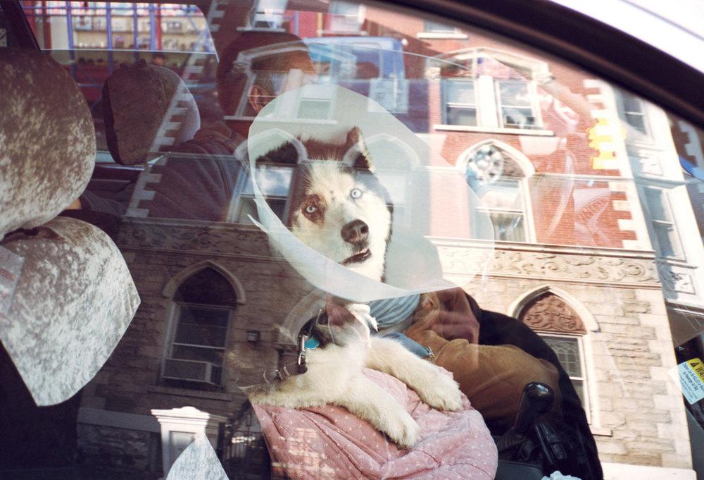 dog_coller.jpg