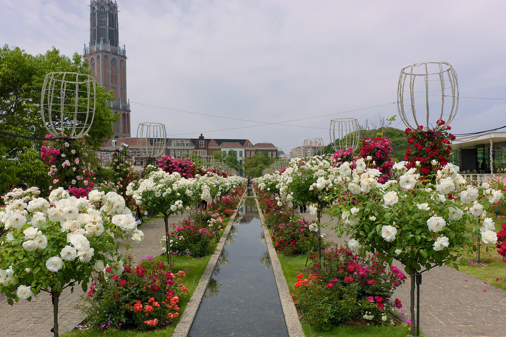 Rose Festival at Huis Ten Bosch, Sasebo, Nagasaki