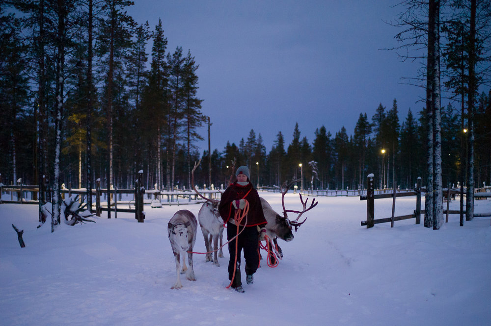 Reindeer Herder after our safaris. there is no wild reindeer in Lapland, all of them are owned by herders