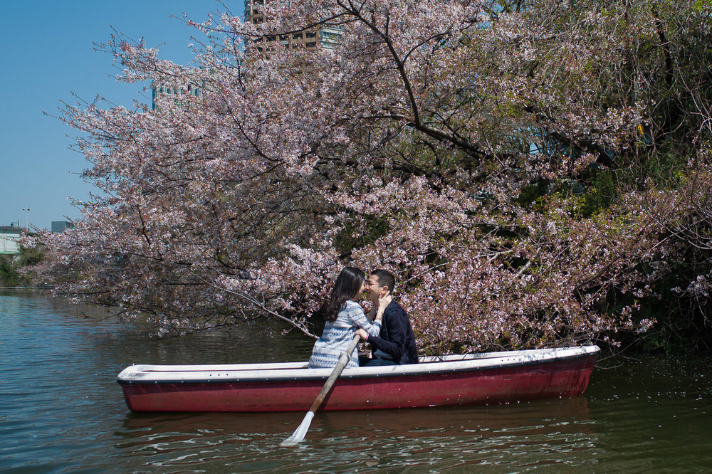 Boat ride during cherry blossom season in Tokyo, Iidabashi