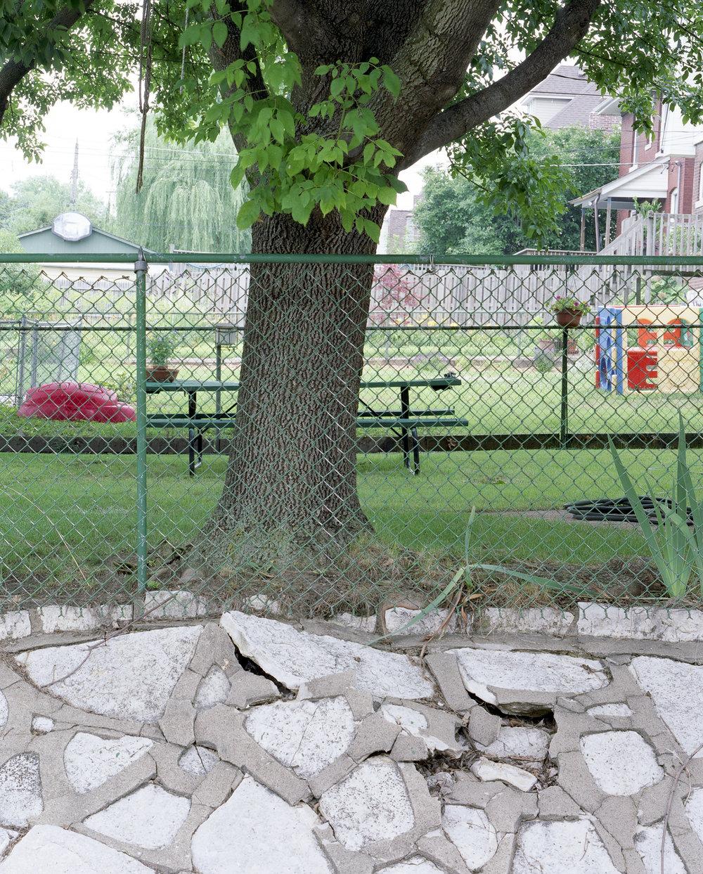 Tree, 2009