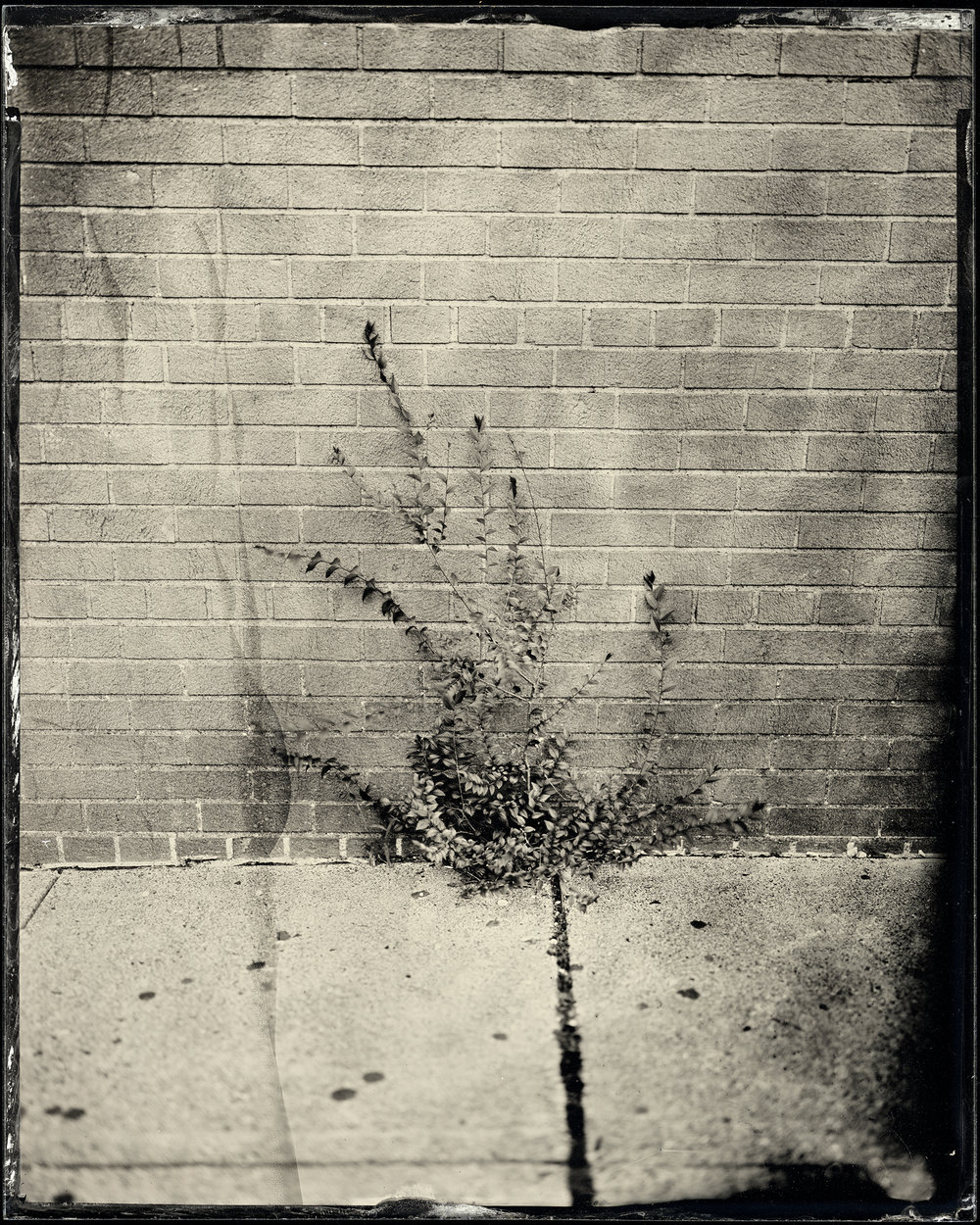 St. Louis Ambrotype No. 096
