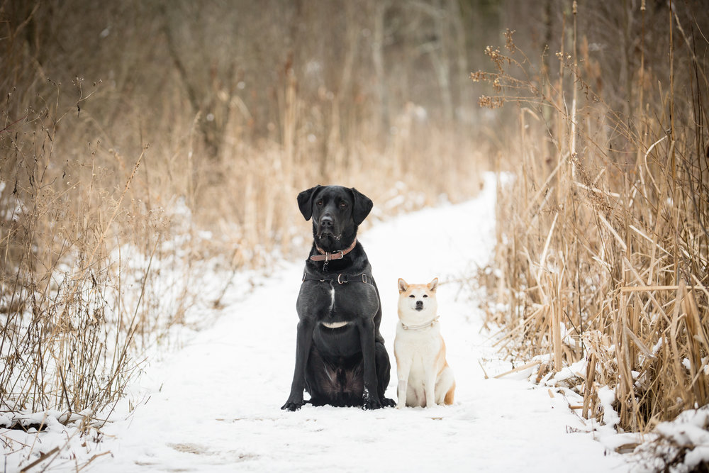 Doug&Kara_winter_Engagment_Photos_Brandon_Shafer_Photography_Blog-16.jpg