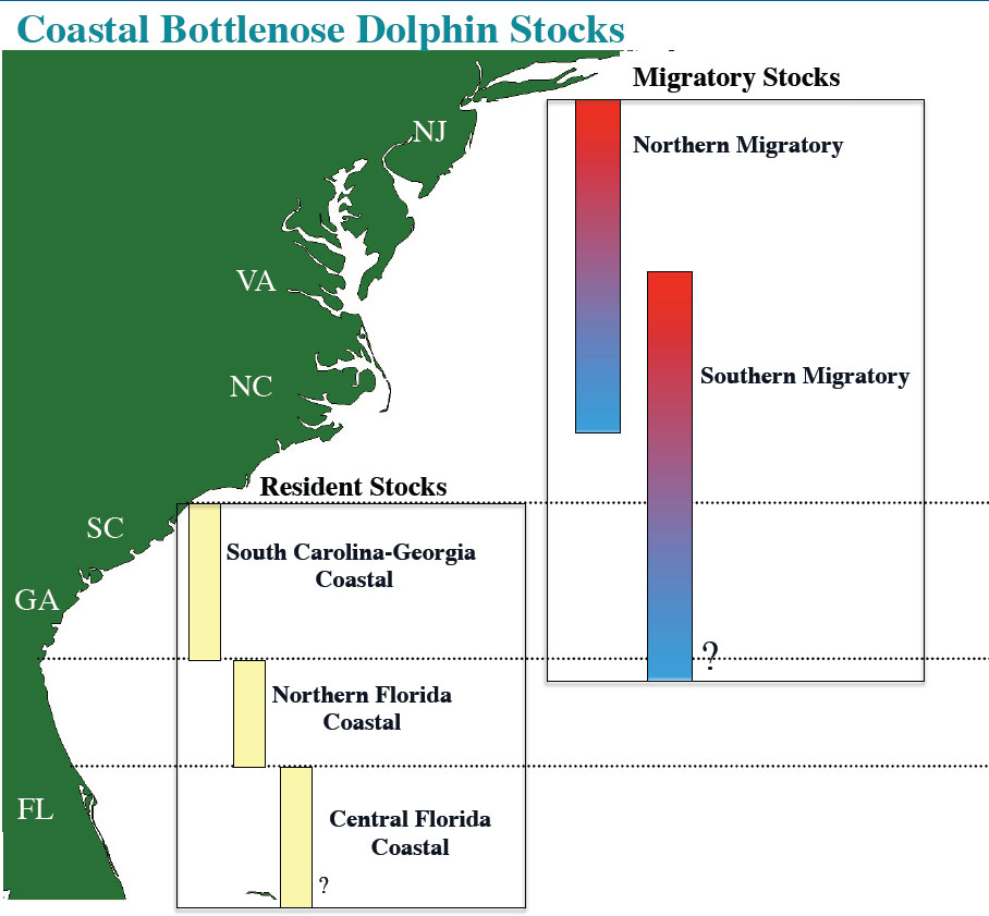 Figure 2. Coastal bottlenose dolphins populations (stocks) according to the National Marine Fisheries Service (NMFS).