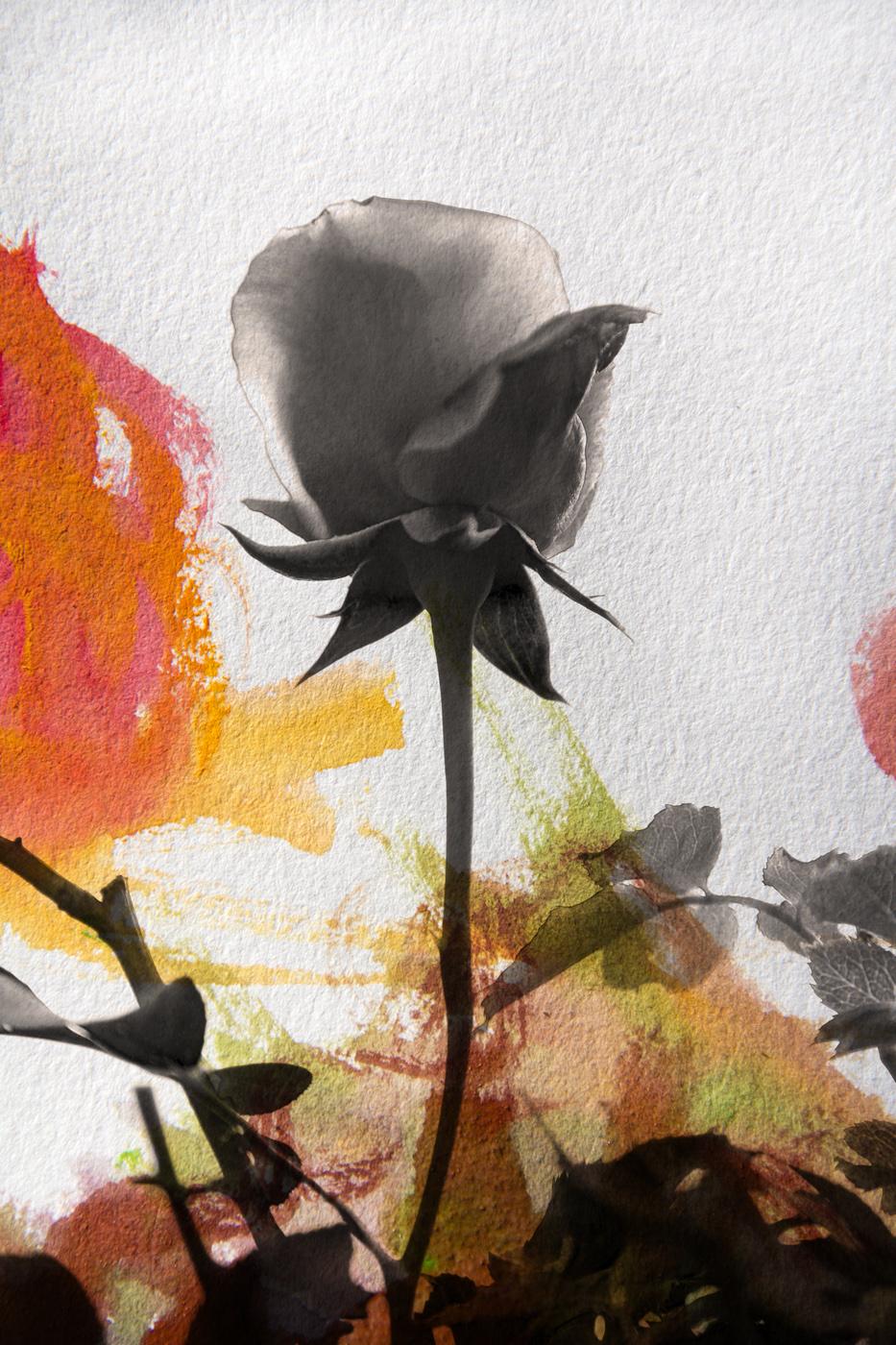 wallflower5.jpg
