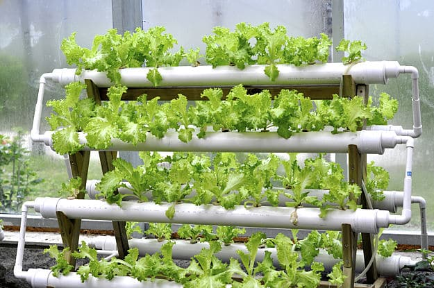 Hydroponic-Gardening_Vertical-Flood-And-Drain-Hydroponic-System.jpg