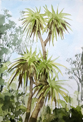 cabbage palms lr.jpg
