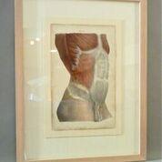 art-torsoprint.jpg
