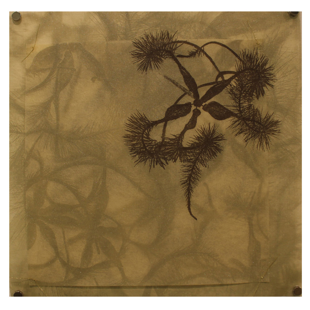 Sally Ayre, Clematis #1, 2016, photo silkscreen