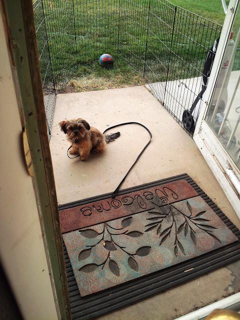 Prisoner Puppy