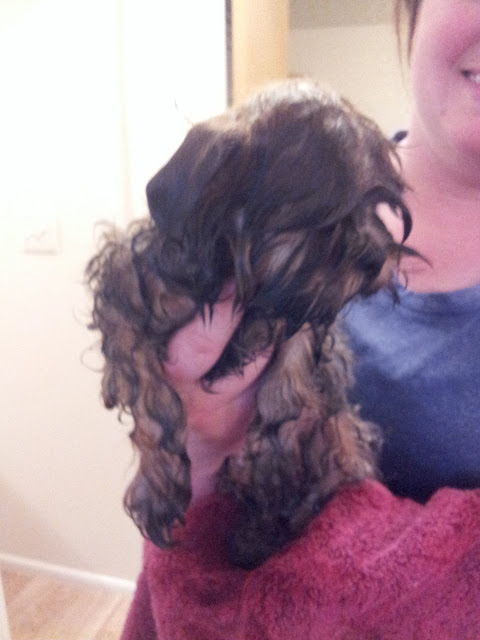 A Wet Puppy