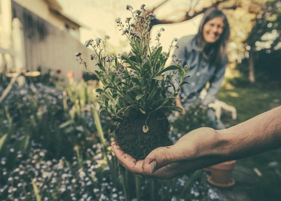 grow a garden together