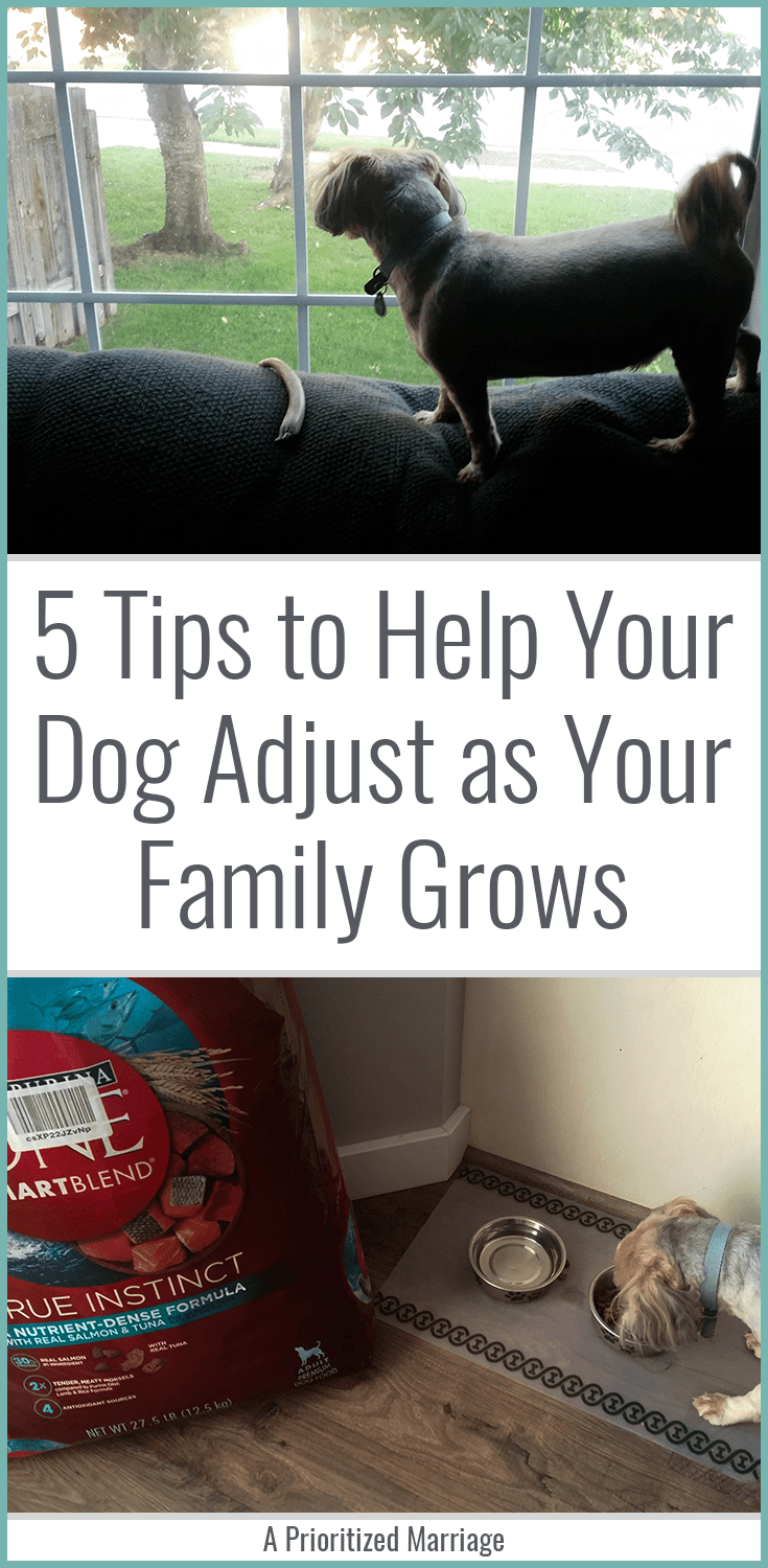 As your family grows, your pets may start to feel left out and less important in your lives. Here are five easy ways to ensure that they always feel loved and know what an important member of the family they are.
