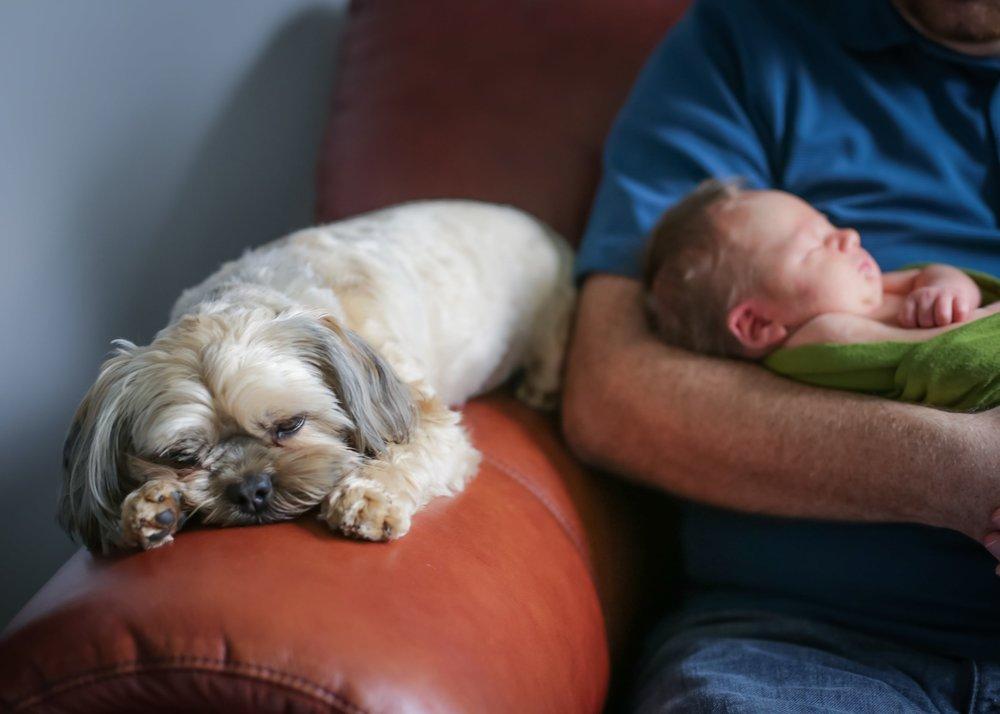 dog adjust to new baby