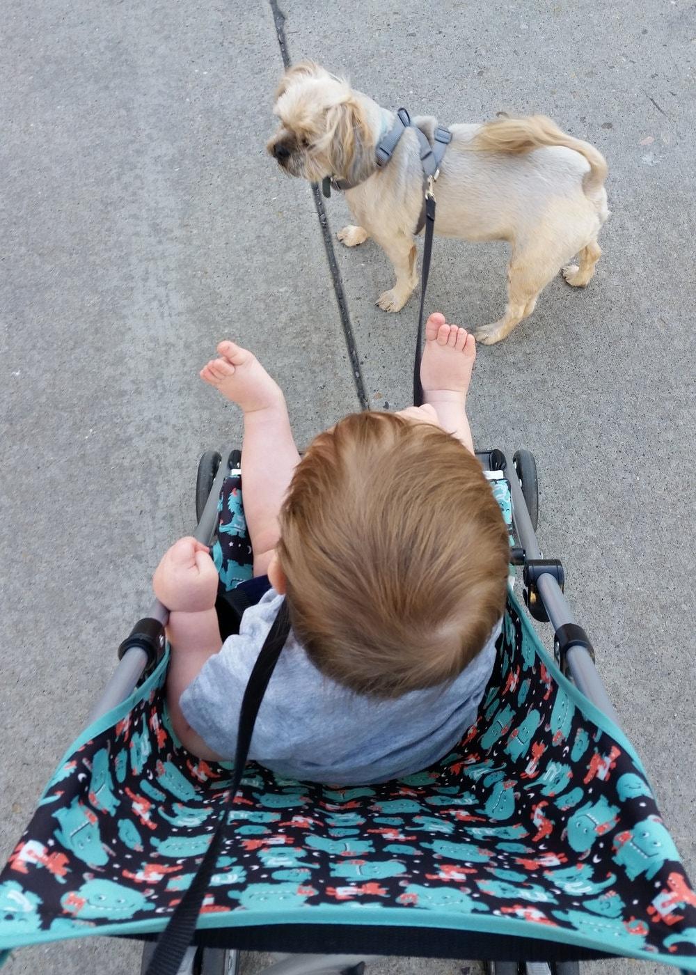 toddler walking dog