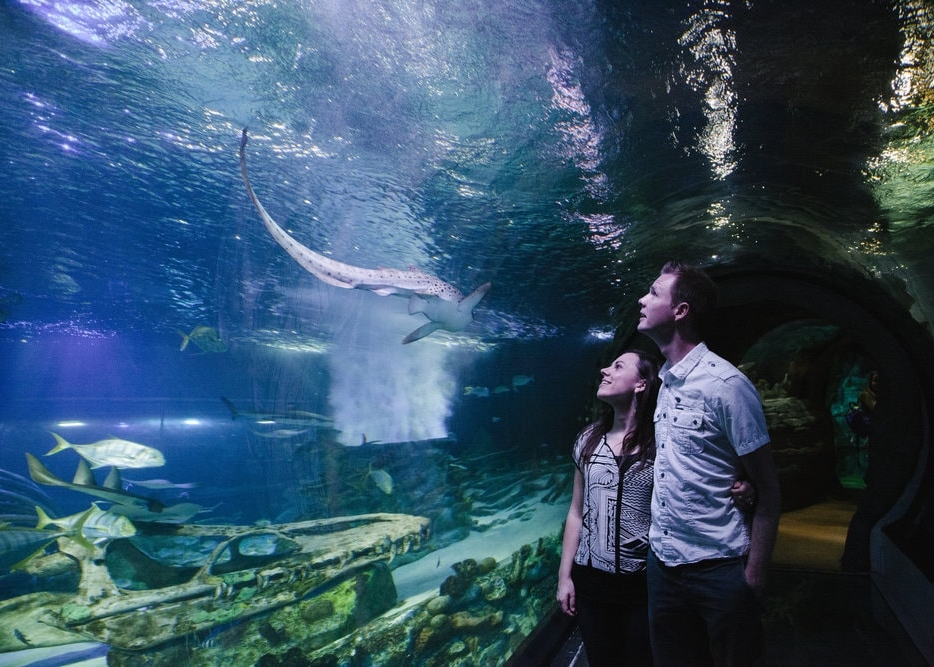date night at the aquarium