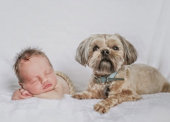how we helped our dog adjust to the new baby