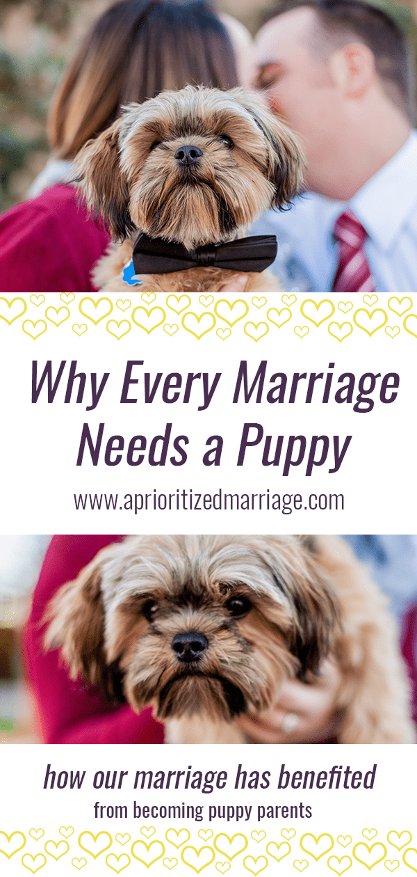 This is the post to read if you've been trying to convince your spouse to get a dog or a puppy!