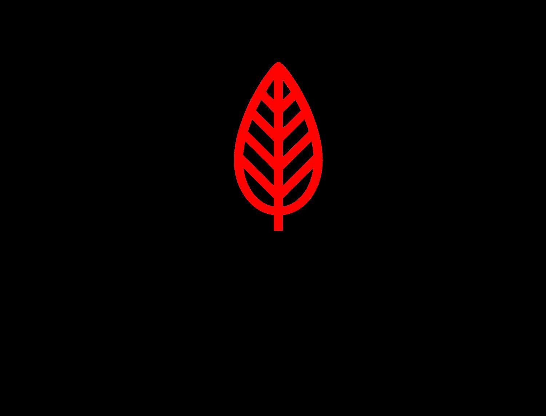red elm career coaching