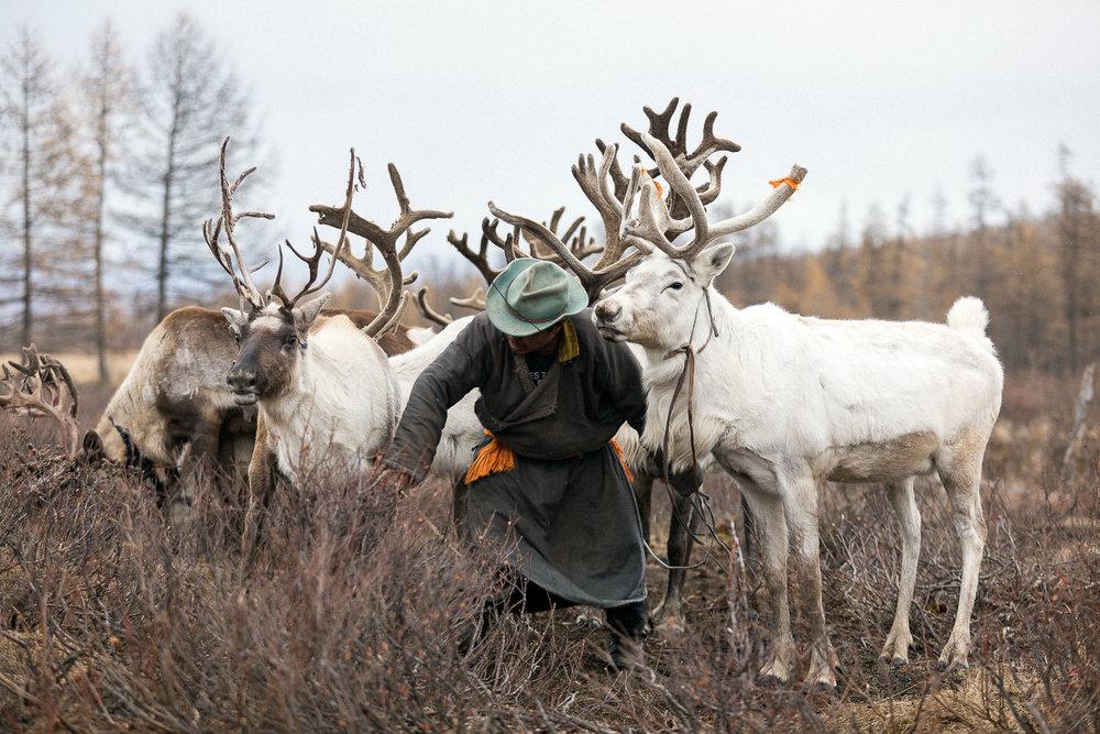 Briceportolano_Mongolia_Zaya_06_Site.jpg