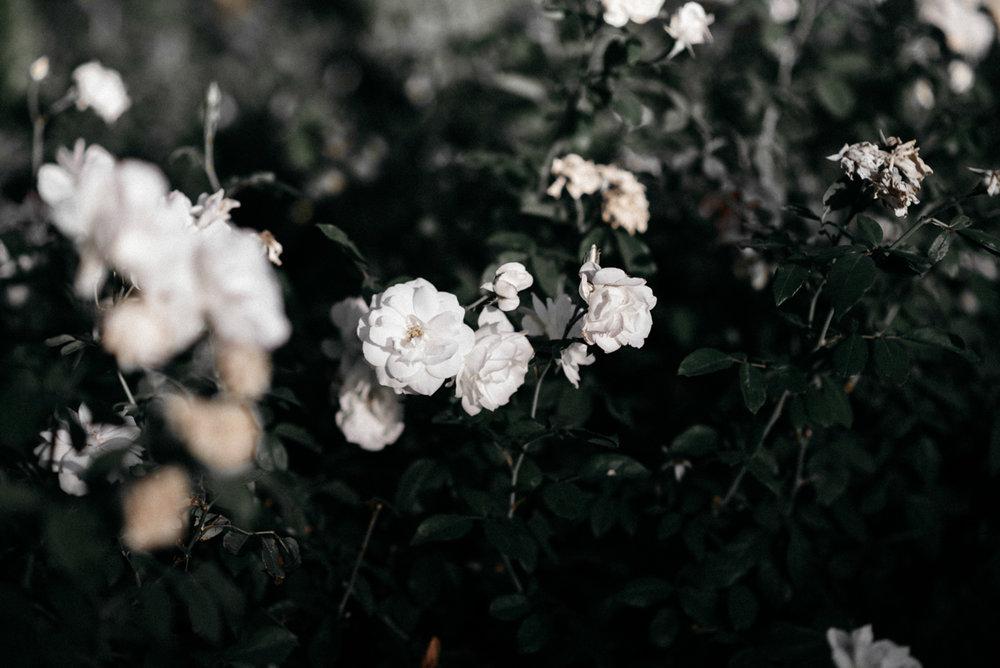 untitled shoot-001-2.jpg