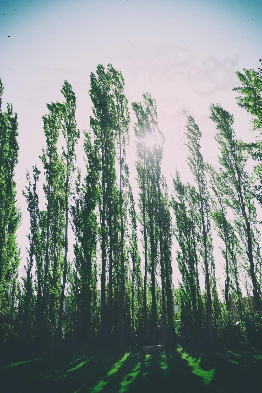 09-Alameda.jpg