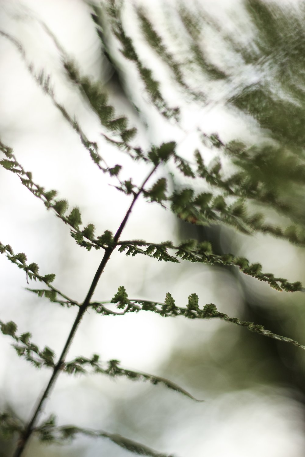 Creative photos of Ferns